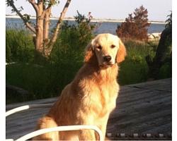 Pet Friendly summer beach house rental in Point Lookout NY - oceanfront overlooking Jones Inlet and Jones Beach